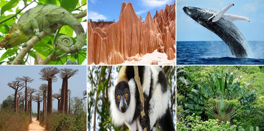 madagascar-biodiversita